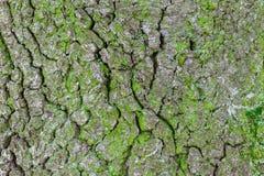 Σύσταση του φλοιού δέντρων Στοκ φωτογραφία με δικαίωμα ελεύθερης χρήσης