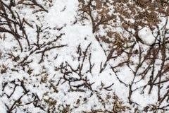Σύσταση του χιονιού στη χλόη Στοκ εικόνα με δικαίωμα ελεύθερης χρήσης