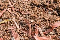 Σύσταση του χώματος στο έδαφος στοκ φωτογραφίες