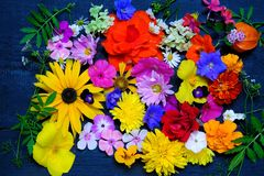 Σύσταση των διάφορων λουλουδιών κήπων, τοπ άποψη στοκ εικόνα με δικαίωμα ελεύθερης χρήσης