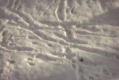 Σύσταση των ιχνών στο χιόνι του του Φεβρουαρίου άνωθεν Στοκ φωτογραφία με δικαίωμα ελεύθερης χρήσης