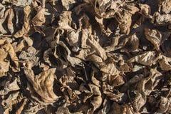 Σύσταση των ξηρών φύλλων στοκ φωτογραφία με δικαίωμα ελεύθερης χρήσης