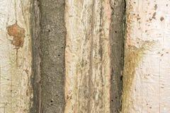 Σύσταση των παλαιών φυσικών ξύλινων κούτσουρων με τις ρωγμές από την έκθεση στον ήλιο και τον αέρα Στοκ Εικόνες