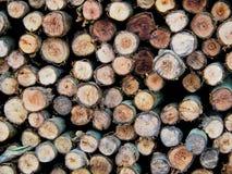 Σύσταση των συσσωρευμένων κούτσουρων πεύκων που κόβονται στα μακροχρόνια κομμάτια, Στοκ φωτογραφίες με δικαίωμα ελεύθερης χρήσης
