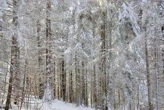 Σύσταση των χιονισμένων δέντρων Στοκ φωτογραφία με δικαίωμα ελεύθερης χρήσης