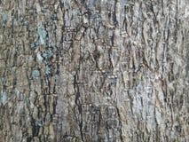 Σύσταση υποβάθρου δέντρων Στοκ φωτογραφίες με δικαίωμα ελεύθερης χρήσης