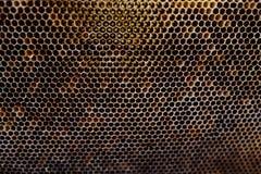 Σύσταση υποβάθρου και σχέδιο ενός τμήματος της κηρήθρας κεριών από μια κυψέλη μελισσών που γεμίζουν με το χρυσό μέλι κατά μια πλή στοκ εικόνες