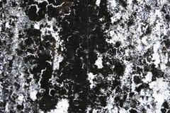 Σύσταση υποβάθρου συμπαγών τοίχων μυκήτων Στοκ Εικόνες