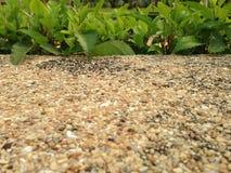 Σύσταση υποβάθρου τοίχων άμμου με το φυσικό θάμνο πέρα από το πλαίσιο Στοκ φωτογραφίες με δικαίωμα ελεύθερης χρήσης