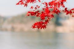 Σύσταση υποβάθρου του κίτρινου υποβάθρου φύλλων φθινοπώρου φύλλων Στοκ Εικόνες