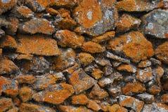 Σύσταση υποβάθρου του παλαιού τοίχου πετρών με την πορτοκαλιά λειχήνα Στοκ Εικόνα