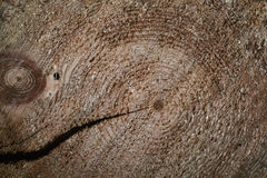 Σύσταση υποβάθρου του φυσικού ξύλου πρόσφατα πριονισμένη ξυλεία Στοκ Φωτογραφία
