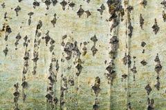Σύσταση, υπόβαθρο της λεύκας φλοιών Στοκ φωτογραφία με δικαίωμα ελεύθερης χρήσης