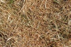 Σύσταση, υπόβαθρο της ξηράς κομμένης χλόης στοκ φωτογραφία με δικαίωμα ελεύθερης χρήσης