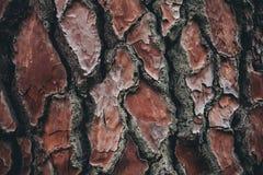 Σύσταση φλοιών δέντρων πεύκων Υπόβαθρο δέντρων πεύκων Αφηρημένα σύσταση και υπόβαθρο για τους σχεδιαστές Φυσικό πρότυπο Στοκ Εικόνες