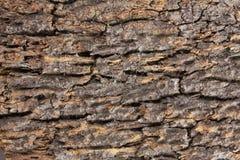Σύσταση φλοιών δέντρων στοκ φωτογραφίες με δικαίωμα ελεύθερης χρήσης