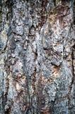 Σύσταση φλοιών ενός κορμού πεύκων κινηματογράφηση σε πρώτο πλάνο, σύσταση, υπόβαθρο Στοκ φωτογραφία με δικαίωμα ελεύθερης χρήσης