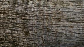 Σύσταση φλοιών κορμών δέντρων ως φυσικό υπόβαθρο στοκ φωτογραφία