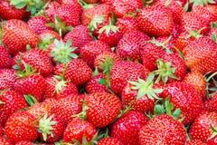 Σύσταση φραουλών - γεμισμένο πλαίσιο Στοκ φωτογραφία με δικαίωμα ελεύθερης χρήσης