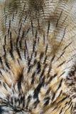 Σύσταση φτερών κουκουβαγιών Στοκ Εικόνες