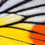 Σύσταση φτερών πεταλούδων Στοκ Φωτογραφία