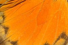 Σύσταση φτερών πεταλούδων Στοκ εικόνες με δικαίωμα ελεύθερης χρήσης