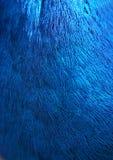 σύσταση φτερών Στοκ φωτογραφία με δικαίωμα ελεύθερης χρήσης