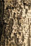 Σύσταση φλοιών, σχέδιο φλοιών Στοκ φωτογραφία με δικαίωμα ελεύθερης χρήσης