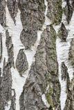 Σύσταση φλοιών Στοκ εικόνα με δικαίωμα ελεύθερης χρήσης