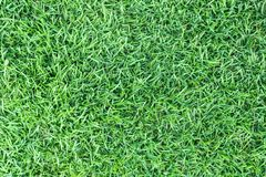 Σύσταση χλόης ή υπόβαθρο χλόης πράσινη χλόη για το σχέδιο έννοιας γηπέδων του γκολφ, γηπέδων ποδοσφαίρου ή αθλητικού υποβάθρου Στοκ Φωτογραφία