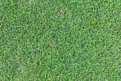 Σύσταση χλόης ή υπόβαθρο χλόης πράσινη χλόη για το σχέδιο έννοιας γηπέδων του γκολφ, γηπέδων ποδοσφαίρου ή αθλητικού υποβάθρου Στοκ φωτογραφία με δικαίωμα ελεύθερης χρήσης