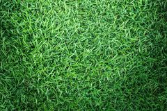 Σύσταση χλόης ή υπόβαθρο χλόης πράσινη χλόη για το σχέδιο έννοιας γηπέδων του γκολφ, γηπέδων ποδοσφαίρου ή αθλητικού υποβάθρου Στοκ Φωτογραφίες