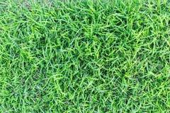 Σύσταση χλόης ή υπόβαθρο χλόης πράσινη χλόη για το σχέδιο έννοιας γηπέδων του γκολφ, γηπέδων ποδοσφαίρου ή αθλητικού υποβάθρου Στοκ Εικόνα