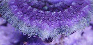 Σύσταση Anemone θάλασσας Στοκ εικόνα με δικαίωμα ελεύθερης χρήσης