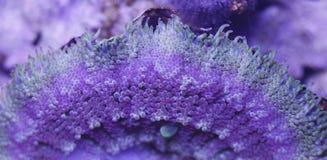 Σύσταση Anemone θάλασσας Στοκ Εικόνες