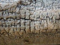 Σύσταση Driftwood Στοκ Εικόνα