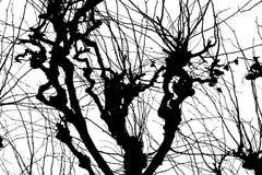 σύσταση Isolant στο άσπρο υπόβαθρο Μαύρη άσπρη σκιαγραφία graphics δέντρο κλάδων ελεύθερη απεικόνιση δικαιώματος