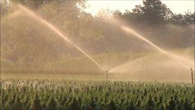 Σύστημα ψεκαστήρων νερού απόθεμα βίντεο