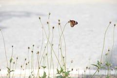 Σύλληψη πεταλούδων στα λουλούδια Στοκ Εικόνες