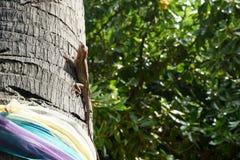 Σύλληψη χαμαιλεόντων σε ένα δέντρο Στοκ εικόνες με δικαίωμα ελεύθερης χρήσης