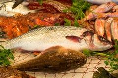 Σύλληψη Fisherman's των φρέσκων ακατέργαστων ψαριών από το Αιγαίο πέλαγος, Σικελία, Ι Στοκ φωτογραφία με δικαίωμα ελεύθερης χρήσης