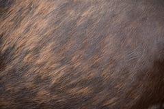 Σώμα αλόγων ως υπόβαθρο Στοκ εικόνες με δικαίωμα ελεύθερης χρήσης