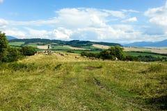 Σλοβάκικο αγροτικό τοπίο με τις αγελάδες και τα λιβάδια Στοκ Εικόνες