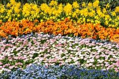 Τάπητας λουλουδιών Στοκ Φωτογραφίες