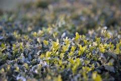 Τάπητας της πρασινάδας Στοκ φωτογραφίες με δικαίωμα ελεύθερης χρήσης