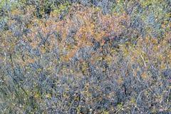 Τάπητας των θάμνων στα χρώματα πτώσης Στοκ Εικόνες