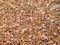 Τάπητας των πεσμένων φύλλων με τα ρόδινα πέταλα Στοκ Φωτογραφία