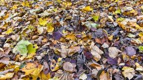 Τάπητας των φύλλων φθινοπώρου στοκ εικόνες