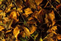 Τάπητας φθινοπώρου Στοκ εικόνα με δικαίωμα ελεύθερης χρήσης