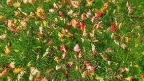 Τάπητας φθινοπώρου Στοκ Εικόνα